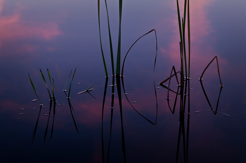 SBP 039<br /> <br /> Sunset clouds are reflected among the shoreline reeds of Crooked Slough.  Springbrook Prairie Nature Preserve, DuPage County, Illinois.