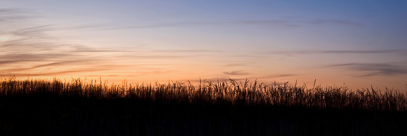 SBP 157<br /> <br /> Prairie grasses silhouetted against a summer sunset at Springbrook Prairie Nature Preserve, DuPage County, Illinois.