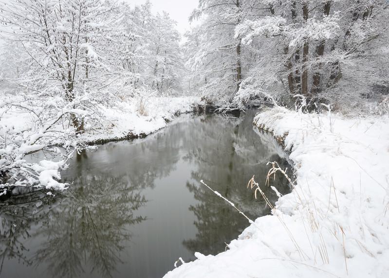 SBP 208<br /> <br /> A hushed landscape of fresh snow along Spring Brook Creek.  Springbrook Prairie Nature Preserve, DuPage County, Illinois.
