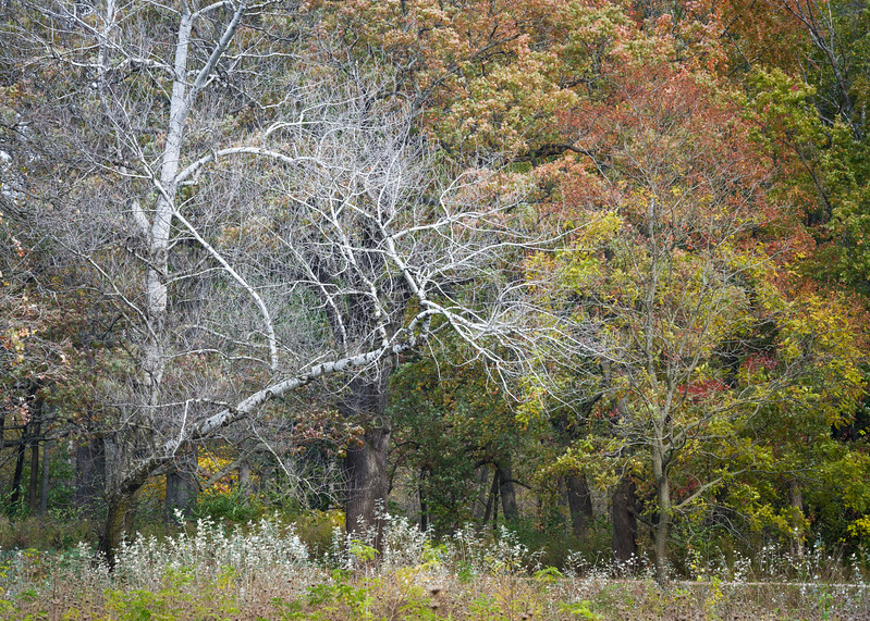 SJF 005<br /> <br /> Autumn at St. James Farm Forest Preserve, DuPage County, Illinois.