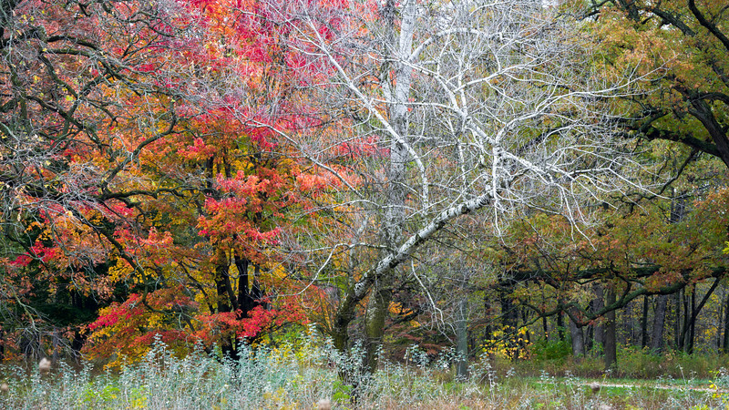 SJF 003<br /> <br /> Autumn colors at St. James Farm Forest Preserve, DuPage County, Illinois.