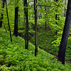 WFG 021<br /> <br /> The spring woods at Waterfall Glen Forest Preserve, DuPage County, Illinois.