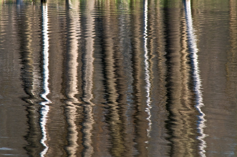 WFG 026<br /> <br /> Abstract reflections in the rippled surface of 91st Street Marsh.  Waterfall Glen Forest Preserve, DuPage County, Illinois.