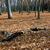 WFG 003<br /> <br /> Autumn leaves cover the forest floor at Waterfall Glen Forest Preserve, DuPage County, Illinois.