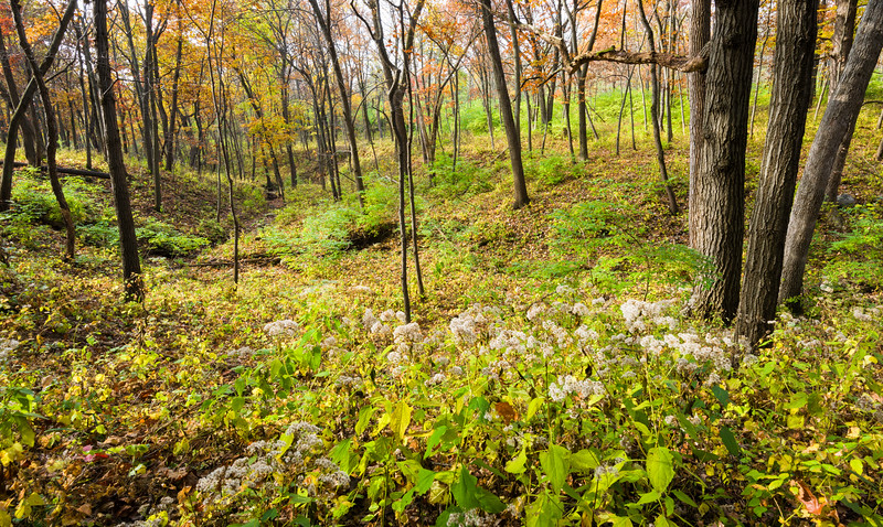 WFG 062<br /> <br /> The autumn woods at Waterfall Glen Forest Preserve, DuPage County, Illinois.
