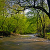 WFG 002<br /> <br /> Sawmill Creek on a sunny, spring afternoon.  Waterfall Glen Forest Preserve, DuPage County, Illinois.