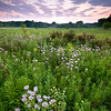 WFG 057<br /> <br /> Wildflowers at sunset.  Waterfall Glen Forest Preserve, DuPage County, Illinois.