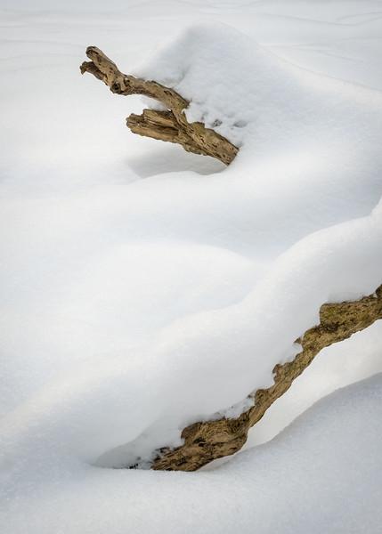 WFG 075<br /> <br /> Deep snow transforms a fallen log into a winter sculpture on the banks of frozen Sawmill Creek.