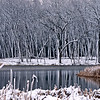 WFG 019<br /> <br /> 91st Street Marsh before freeze-up in winter.  Waterfall Glen Forest Preserve, DuPage County, Illinois.