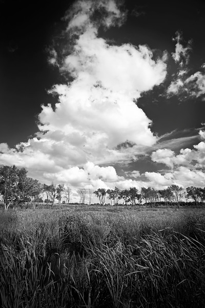 WB 006<br /> <br /> Towering clouds over a wetland habitat at West Branch Forest Preserve, DuPage County, Illinois.