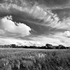WB 008<br /> <br /> Towering clouds over a wetland habitat at West Branch Forest Preserve, DuPage County, Illinois.