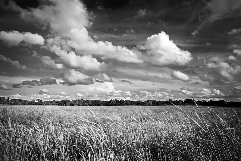 Summer clouds drift over a wetland habitat at West Branch Forest Preserve, DuPage County, Illinois.