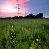 WCP 008<br /> <br /> Prairie dock and native wildflowers at sunset.  West Chicago Prairie Forest Preserve, DuPage County, Illinois.