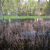 WDW 010<br /> <br /> A vernal spring pool at West DuPage Woods Forest Preserve, DuPage County, Illinois.