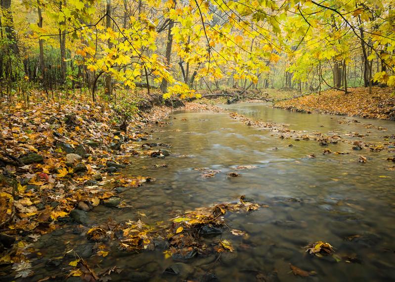 BP 018<br /> <br /> Black Partridge Creek flows peacefully through a landscape of autumn colors at Black Partridge Nature Preserve, Cook County, Illinois.