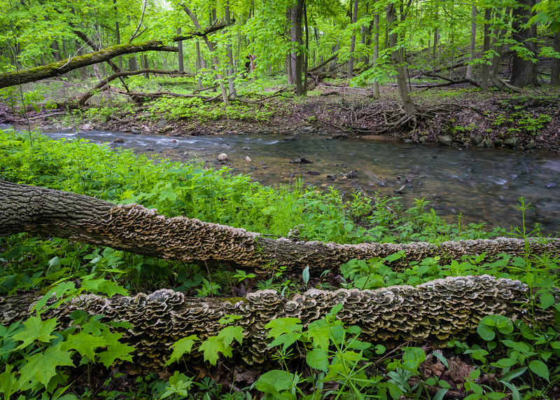 BP 020<br /> <br /> Springtime in Black Partridge Nature Preserve.  Will County, Illinois.