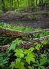 BP 019<br /> <br /> Springtime in Black Partridge Nature Preserve.  Will County, Illinois.