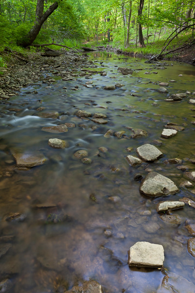 Black Partridge creek in Spring. Lemont, IL<br /> <br /> IL-100503-0004