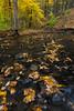 Black Partridge Stream Autumn