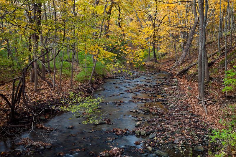 Black Partridge Autumn