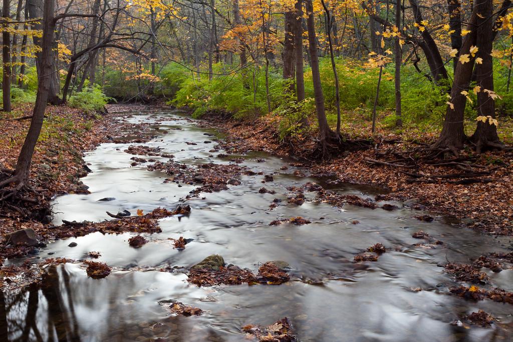 Fall color along the creek in Black Partridge. Lemont, IL<br /> <br /> IL-111024-0023