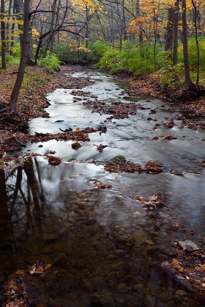 Fall color along the creek in Black Partridge. Lemont, IL<br /> <br /> IL-111024-0025