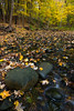 Black Partridge Stream and Leafs