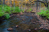 Fall color along the creek in Black Partridge. Lemont, IL<br /> <br /> IL-111024-0015