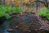 Fall color along the creek in Black Partridge. Lemont, IL<br /> <br /> IL-111024-0015