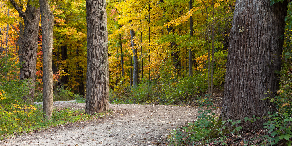 Fall color in the woods of Warrenville Grove. Warrenville, IL<br /> <br /> IL-091017-0041
