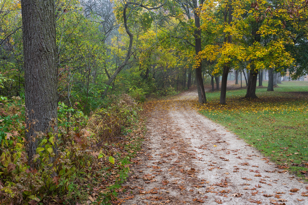 Although late in the fall, some trees along the forest preserve trails are still turning into their fall colors. Naperville, IL<br /> <br /> IL-151104-0065