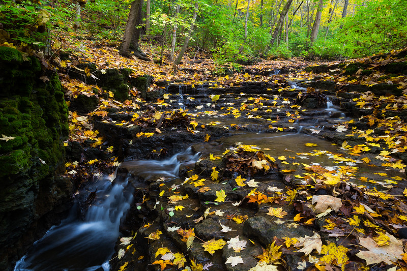 Waterfall and Golden Leafs