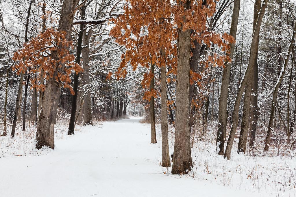 Waterfall Glen woods in winter. Darien, IL<br /> <br /> IL-100222-0021