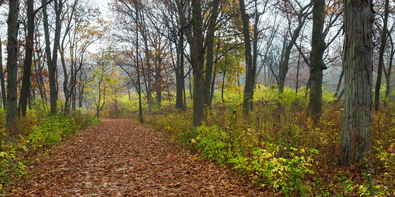 Trail Leafs IV