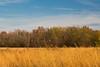 Gold on the Prairie