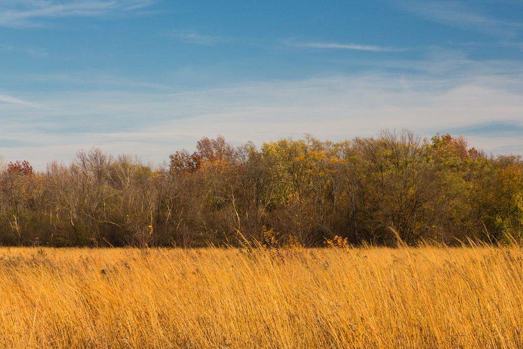 Gold on the Prairie