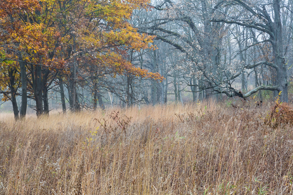 Blackwell Forest Preserve late Autumn scene. Warrenville, IL<br /> <br /> IL-151103-0054