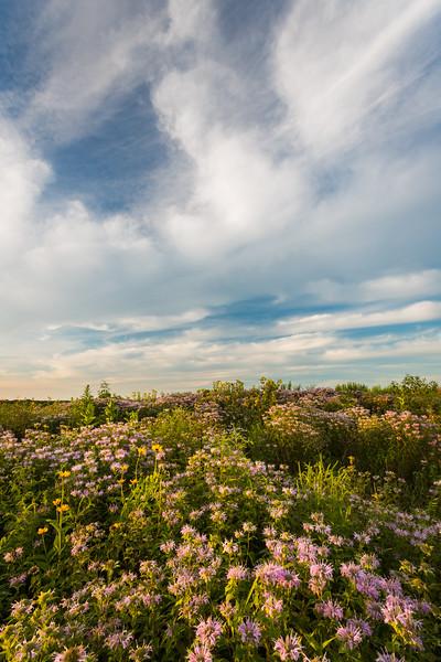 Wld Bergamot and Sky