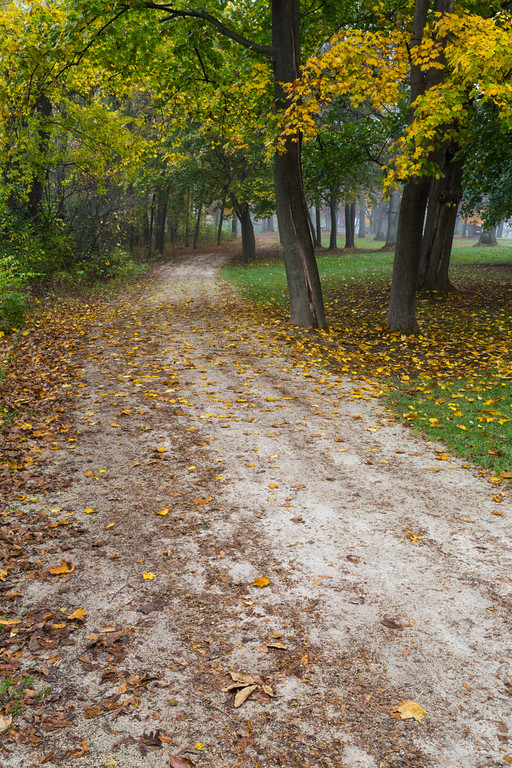 Although late in the fall, some trees along the forest preserve trails are still turning into their fall colors. Naperville, IL<br /> <br /> IL-151104-0067