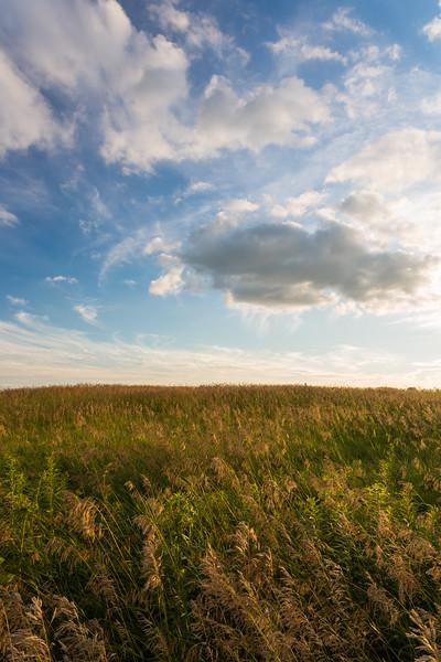 Springbrook Grasses