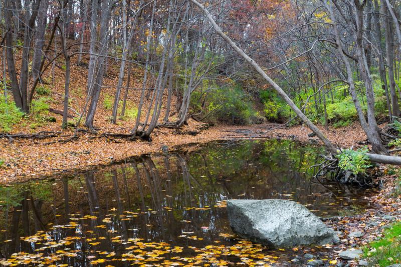 Sawmill Creek Autumn Scene