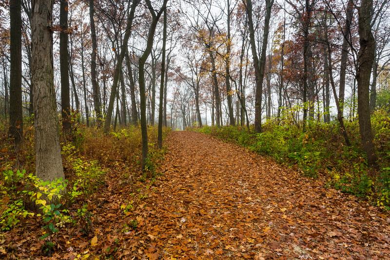 Trail Leafs V