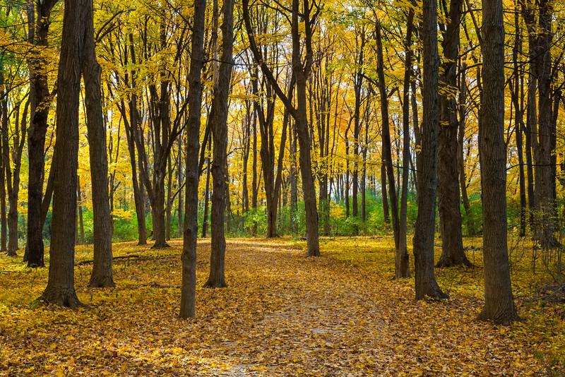 Leaf Trail I