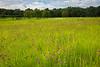 Prairie Clover Prairie