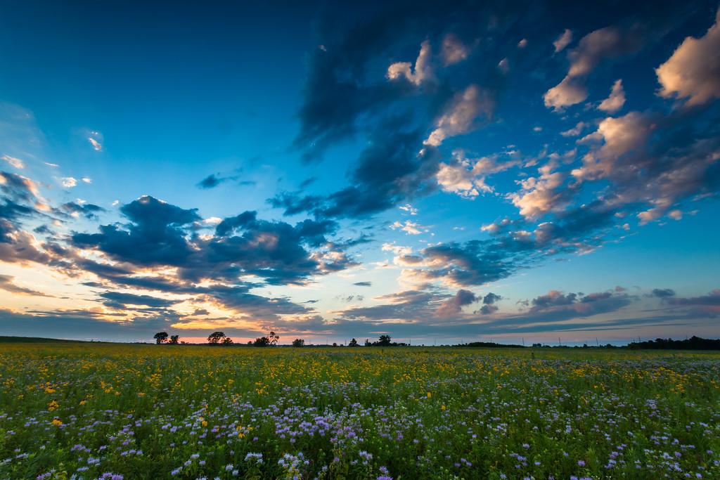 Summer wildflowers dot the landscape in Springbrook Prairie. Naperville, IL<br /> <br /> IL-100719-0011