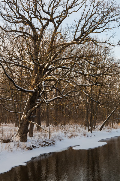 Oak and River