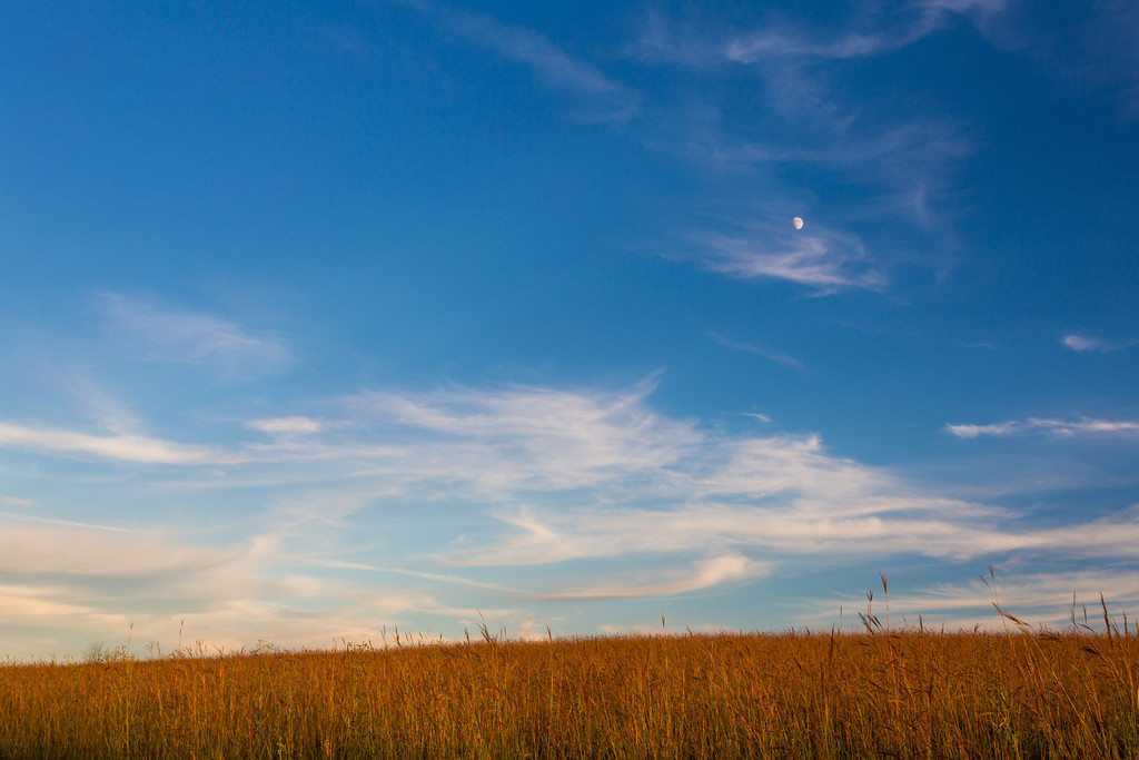 Moon over Prairie Grasses
