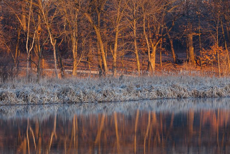 Sunrise light over the woods in 91st Marsh. Darien, IL<br /> <br /> IL-090314-0006