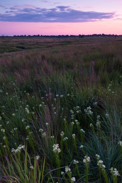 Summer sunset at Springbrook Prairire. Naperville, IL<br /> <br /> IL-090723-0036