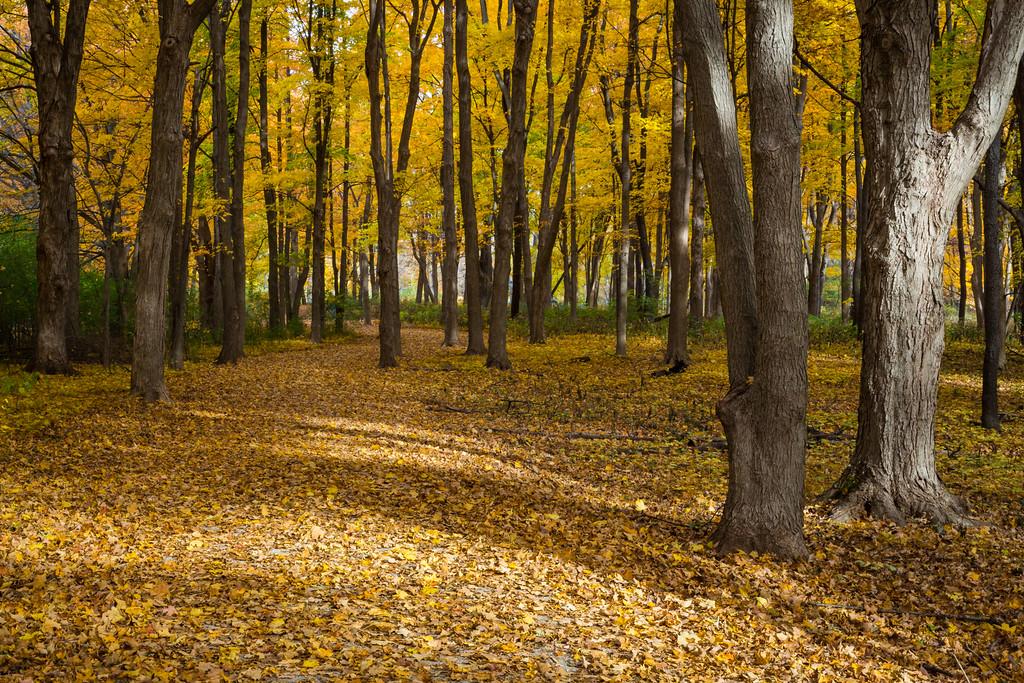 Leaf Trail II